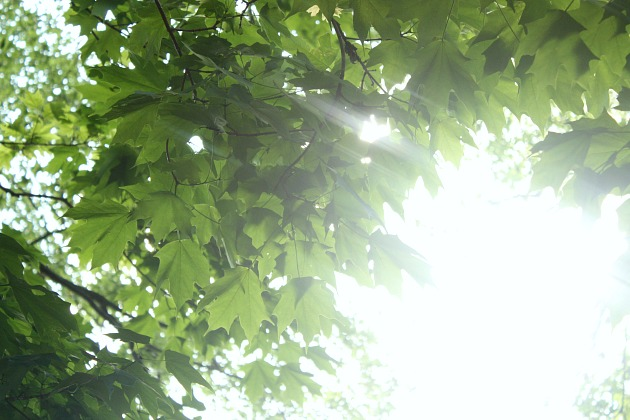 sunhope