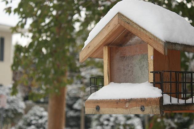 snowdaybirdhouse